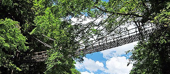 吉野川ラフティング 宿泊オプション ゆとりすとパークおおとよ